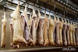 Комбинат мясной гастрономии «Черкашин и Партнеръ». Екатеринбург, свинина, мясокомбинат, мясо, туша свиньи, туша животного