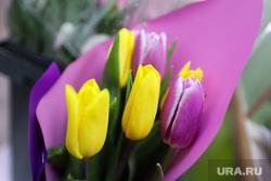 Цветы. Дети. Пенсионеры. Курган, букет, цветы, тюльпаны