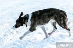 Собаки. Тюмень, зима, пес, бродячая собака