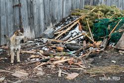 Свалка мусора в частном секторе города не перекрестке улиц Чкалова и Зеленой. Курган, мусор, собака, елки выбросили