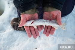 Зимняя рыбалка на реке Обь. Сургут , зимняя рыбалка, улов, щука