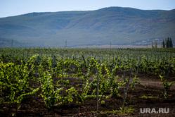 Отдых в Крыму, крым, винодельня, виноградники