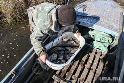 Рыба. Заболотье. Тюменская область, рыбак, щука, карась, рыба, рыболовство, заболотье