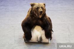 Торжественное открытие Нижнетагильского государственного цирка после реконструкции. Свердловская область, Нижний Тагил , цирк, арена, медведь, шоу