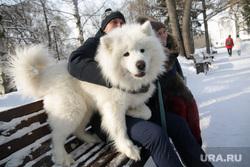 Собака-обнимака. Пермь, собака, прогулка, зима, выгул собак, пес, парк, животные, домашний питомец, прогулка с собакой, лайка