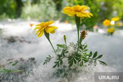 Июнь в Екатеринбурге, тепло, клумба, тополиный пух, лето, жара, цветы