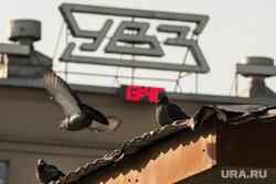 Заседание в Дзержинском райсуде по УВЗ. Нижний Тагил, голуби, нижний тагил, увз, уралвагонзавод