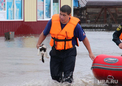 Клипарт. Челябинск, кошка, потоп, наводнение, спасение, спасатель, дождь