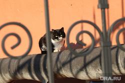 Депутатские комиссии гордумы по экономической политике и развитию городского хозяйства Курган, кошка, бездомные животные, кот