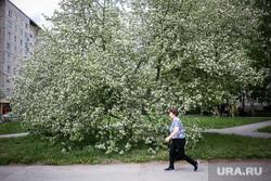 Виды Тюмени. Тюмень , яблоня цветет, женщина, весна, май