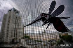 Виды Екатеринбурга, насекомые, комар, москит, москитная сетка, окно