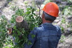 Вырубка деревьев на набережной в Центральном парке культуры и отдыха. Курган, вырубка кустов, зеленые листья, вырубка деревьев, работники в касках