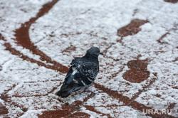Объезд городских территорий Борисом Дубровским. Челябинск, снег, перекресток, голубь