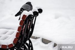 Снег в Екатеринбурге, снег, зима, голубь, снегопад