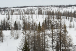 День оленевода в селе Аксарка, ЯНАО, зима, лес, тундра, арктика, лесотундра