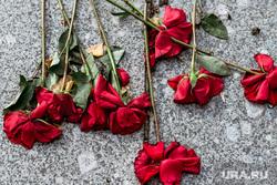 Виды города, осень. Тюмень, розы, цветы на монументе