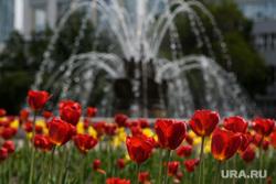 Пятьдесят четвертый день вынужденных выходных из-за ситуации с распространением коронавирусной инфекции CoVID-19. Екатеринбург, тюльпан, тюльпаны, тепло, лето, городские цветы, благоустройство города, весна