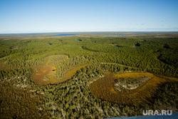Предварительное голосование на хантыйских стойбищах. Сургутский район , хмао, лес, арктика, вид сверху, югра, тайга, с вертолета