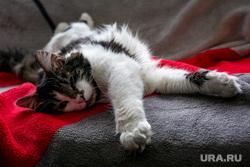 Кот, найденный на стадионе Лужники во время полуфинала ЧМ-2018 по футболу. Москва, кошка, кот