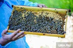 Сельское хозяйство. Григорьевские фруктовые сады. Челябинская область, пчелы, улей, мед, садоводство, сельское хозяйство, пасека, григорьевские сады, агротехнологии