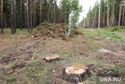 Вырубка леса КГСХА Курганская область, вырубка леса, пни