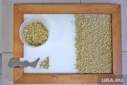 Открытие элеватора.необр, пшеница, зерно, исследование, зерновая лаборатория