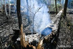 Пожар под Рефтинским. Свердловская область, пожарище, дерево горит, сгоревший лес, лесные пожары, лес после пожара