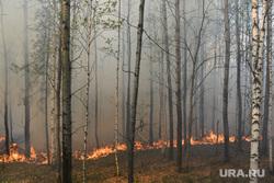 Пожар под Рефтинским. Свердловская область, лесной пожар