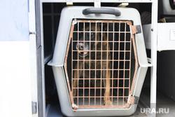 Центр кинологической службы. Курган, собака, пес, злая собака, клыки, агрессия, оскал, клетка, собачьи бои