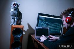 Хакер, IT (иллюстрации), кошка, музыка, кот, пение, питомец, певец, програмист, домашнее животное, музыкальные колонки, компьютер, хакер, компьютерные сети