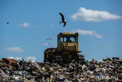 Клипарт. Сургут, птицы, отходы, полигон тбо, мусорка, бульдозер на свалке, свалка, мусорный полигон, экология