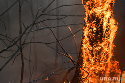 Пожар под Рефтинским. Свердловская область, лесной пожар, пожар в лесу