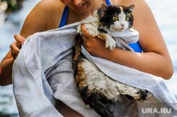 Экология Миасса и окрестностей. Челябинск, кошка, жара, лето, отдых, мокрая кошка