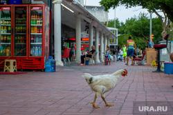 Турция 2020. Пермь, турция, путешествия, отдых, курица, туризм