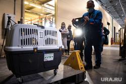Перевозка трех бурых медвежат из аэропорта Кольцово в Хабаровск. Екатеринбург, медведи, грузовой терминал, перевозка животных, клетка, транспортировка животных, медвежата