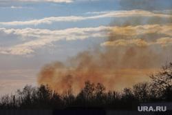 Пожар на шоссе Тюнина. Курган, пожар, лесной, тушение пожара