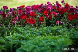 Посадка цветов на клумбах около Кинотеатра «Космос». Екатеринбург, клумба, высадка цветов, клумба с цветами, петуньи, цветы, благоустройство, посадка цветов