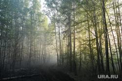Пожар под Рефтинским. Свердловская область, дымка, лес в дыму, дым от пожара