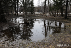 Затопленный Дендрологический парк. Екатеринбург, деревья в воде