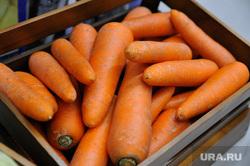 Сельскохозяйственная выставка. Тюмень, овощи, морковь, сельское хозяйство