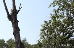Дорожная камера видеонаблюдения. Курган, обрезанные деревья, срубленные ветки