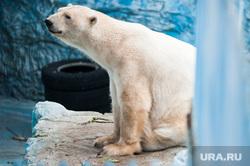 Екатеринбургский зоопарк , зоопарк, животные, белый медведь