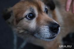 Собаки из приюта. Екатеринбург, собака, пес, питомец