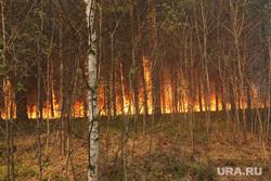 Рейд по лесным пожарам. Тюмень, огонь, лес горит, лесной пожар, лесные пожары, тушение лесных пожаров