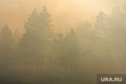 Верховые пожары в поселках Джабык и Запасное. Челябинская область, дым, лесной пожар