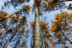 Поездка полпреда Владимира Якушева и Алексея Текслера в районы пострадавшие от пожаров. Челябинск, деревья, лес, пожарище, сосна