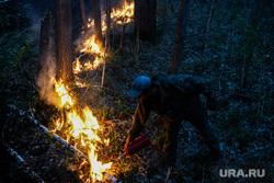 Пожар под Рефтинским. Свердловская область, тушение огня, лесной пожар, пожар в лесу, встречный пал