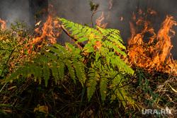 Лесной пожар на озере Глухое. Свердловская область, пожар, огонь, лес горит, лесной пожар, пожар в лесу, папоротник