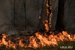 Лесной пожар на озере Глухое. Свердловская область, пожар, огонь, лес горит, лесной пожар, пожар в лесу