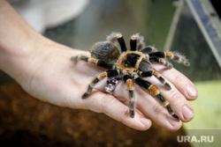 Екатеринбургский зоопарк. Екатеринбург, паук, птицеед, тарантул